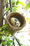 Birdnest and egg Royalty Free Stock Photo