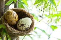 Birdnest and eggs Stock Photo