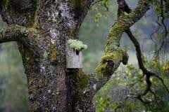Birdnest i tree.JH Royaltyfri Bild