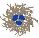 Birdnest med 3 blåa ägg Arkivfoto