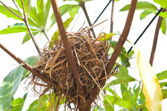 Birdnest na drzewie Zdjęcia Stock