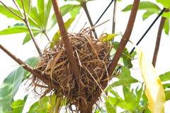 Birdnest on tree. Dry grass birdnest on tree Stock Photos