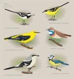Birdos do grupo de imagem f Imagem de Stock