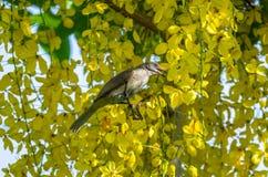 Birdperched σε έναν κλάδο Στοκ Φωτογραφίες
