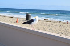 BirdPhoto Lizenzfreies Stockbild