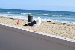 BirdPhoto Royalty Free Stock Image