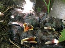 Birds' royalty-vrije stock foto