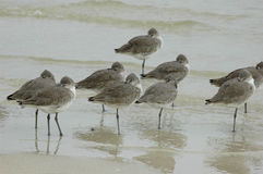 Birds. On the beach Stock Photography