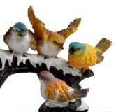 Birds. Four beauty full birds sitting on the stem Royalty Free Stock Photos