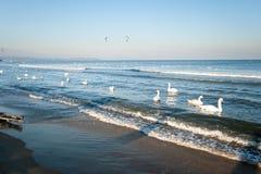 The birds. In winter the sea. Polish Baltic coast in winter, Gdansk, Poland Stock Image