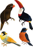 Birds. Amazon animals art beak beautiful Stock Photo