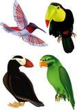 Birds. Amazon animals art beak beautiful Stock Photography