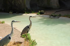 Birds. Two birds sitting at the water Royalty Free Stock Photography