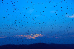 The Birds royalty free stock image