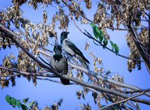 Birds. Two birds on a tree Stock Image