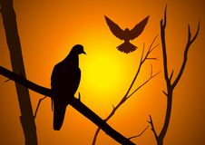 Birds. Silhouette illustration of birds on dried branch Stock Images