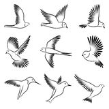 Birds. A set of sketches of birds Royalty Free Stock Photography