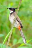 Birds. Lovely Birds in the tree Royalty Free Stock Photo