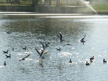 Birds. Over the water fountain Royalty Free Stock Photography