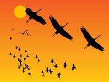 Birds Royalty Free Stock Photos