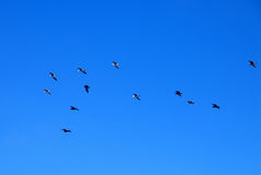 Birds. Sky Royalty Free Stock Photo