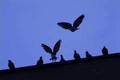 Birds. Flying birds Stock Image