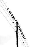 Birds. Standing on the wires Stock Images