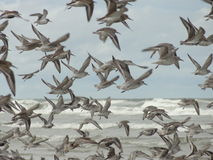 Birds. Image of flock of birds at the seashore Royalty Free Stock Image