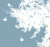 Birds. Illustration of white branches with birds Stock Photos
