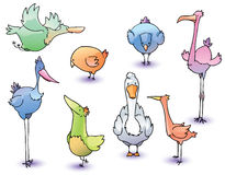 Birds. The set of the funny cartoon vector birds Stock Images