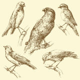 Birds stock illustration