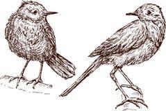 Birds Stock Photos