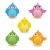 Birds. Royalty Free Stock Images