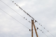 Birds. Stock Photos
