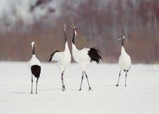 Free Birds Stock Photography - 266762