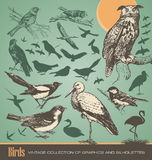 Birds. Vintage set of silhouettes and graphics Royalty Free Stock Images