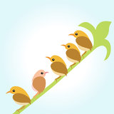 Birds. On the branches green Royalty Free Stock Photo