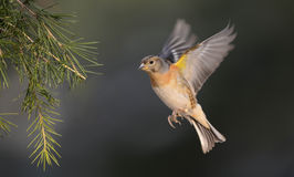 Birds, Royalty Free Stock Images