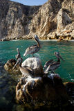 Birds. In Los Cabos, Baja California Sur, Mexico Royalty Free Stock Photos