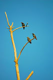 Birds. On a tree branch Royalty Free Stock Photo