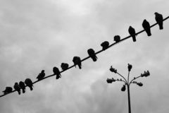 Birds. Pigeons sitting on a wire Royalty Free Stock Photography