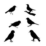 Birds. Silhouette of different wild birds vector illustration