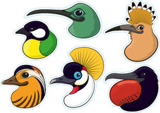 Birds 4. A selection of colourful birds heads displayed in the form of a fridge magnet Royalty Free Stock Image