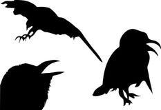 Birds. Black birds silhouette on white background Royalty Free Stock Photo