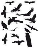Birds. 14 Black birds silhouette Illustration Royalty Free Stock Photography