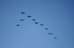 Birds. Goup of birds fly in the sky royalty free stock photo