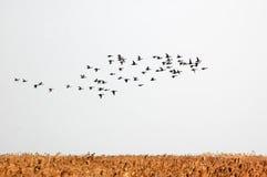Free Birds Royalty Free Stock Photography - 48543817