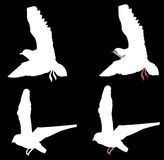 Birds. Illustrations of birds in flight vector illustration