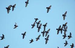 Birds Stock Photography