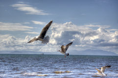 Birds. Sea shore with birds in flight Royalty Free Stock Photos
